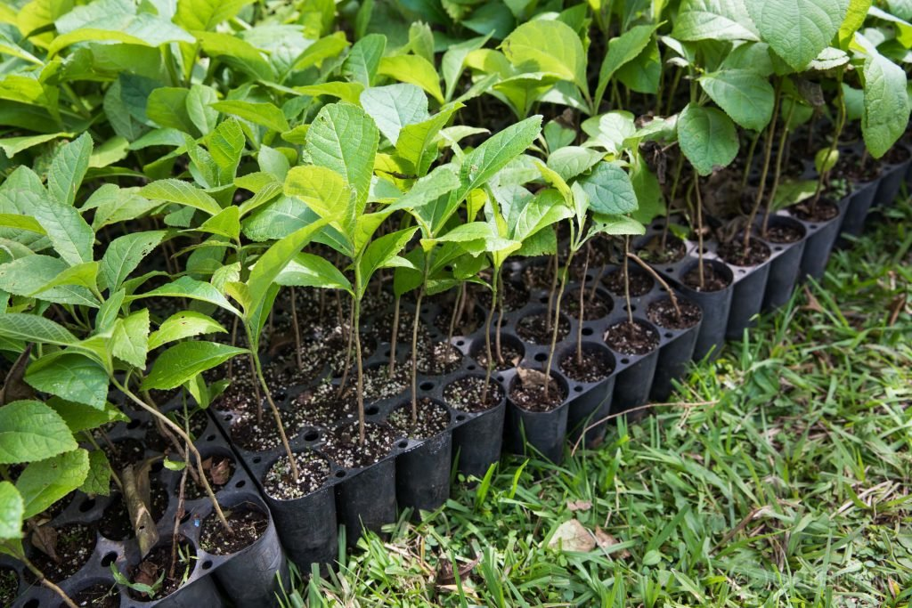 one-tree-planted-4